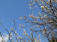 一歩、一歩、春へと向かう。 - タビノイロドリ