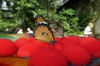 Butterfly Gardens - ビクトリア日記