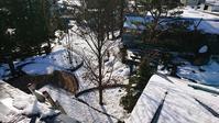 春の雪のあとは庭仕事♪ - 今から・花