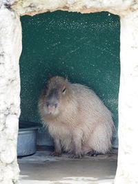 3月9日(土)サンキューの日 - ほのぼの動物写真日記