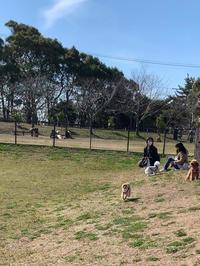 sky☆垂水健康公園ドッグラン - SORANKO