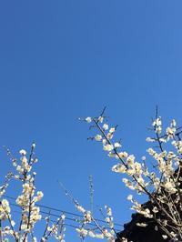 春です🌸 - ホリスティックセラピー Rosewood ∞ space