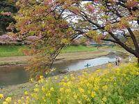 下賀茂温泉の河津桜 - 花空間PHOTO