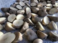 ジャガイモ植え付け - 週末農夫コーディーのイケてる鍬の振るい方