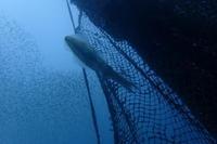19.3.9今週は悪天候、に。 - 沖縄本島 島んちゅガイドの『ダイビング日誌』