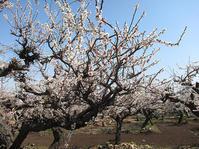 春よ来い - バリ島大好き