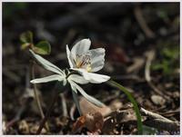 赤塚植物園‐1010) - 趣味の写真 ~OLYMPUS E-M1MarkⅡ、PenF~