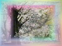 フォト575『こりもせずあそぶがほとけ花の春』zqx0905 - 老仁のハッピーライフ