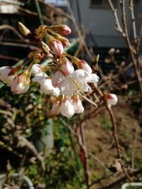 草花も春 - slow着物のブログ