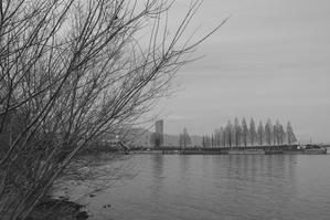 琵琶湖岸より - 琵琶湖の近く・いつもの散歩道3 and 京都あれこれ