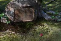 「落ちる華あり-法然院から哲学の路  Honen-in Temple -」 - ほぼ京都人の密やかな眺め Excite Blog版