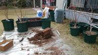 ブルーベリーの鉢増しと施肥 in 広島市 - 初めてのブルーベリー栽培記