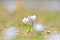 春のうた - お花びより