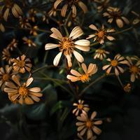 ・まばらな花・ - - Foliage & Blooms'葉と花' pics. -