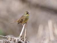小文間で野鳥観察 - コーヒー党の野鳥と自然 パート2