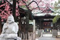 荏原神社の寒緋桜 - PHOTO Cruise