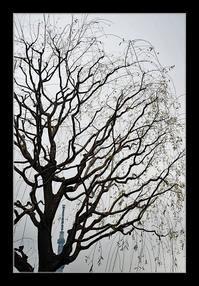 柳とスカイツリー - Desire