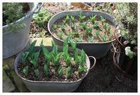 春の芽吹き - natu     * 素敵なナチュラルガーデンから~*     福岡で庭造り、外構工事(エクステリア)をしてます