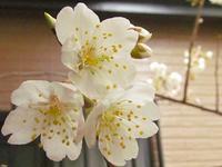可愛い花を - 花☆枯れました!