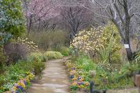 3月のアンジェ〜園内の木々と花 - 柳に雪折れなし!Ⅱ