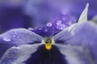 flowers(3cut)雨の日 -     ~風に乗って~    Present
