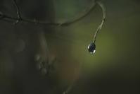 raindrop -     ~風に乗って~    Present