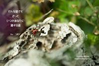 蟄虫敬戸 - 日々の欠片を紡ぐ日々
