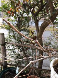 2019 03月 - 三楽 3LUCK 造園設計・施工・管理 樹木樹勢診断・治療