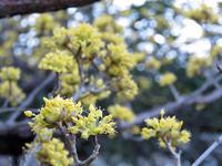 四温 - 清治の花便り