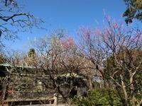 3/10、NC700Sで茅ヶ崎里山公園ほか、お花見 - 某の雑記帳