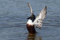 ★金曜の調査結果も含めての先週末の鳥類園(2019.3.8~10) - 葛西臨海公園・鳥類園Ⅱ
