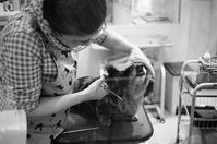 ペットトリムとジャノメミシン - 照片画廊