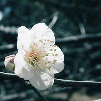 梅の季節に湯島散策聖橋から湯島聖堂散策19.02.16 11:36 - スナップ寅さんの「日々是口実」
