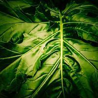 ・照かる緑の葉・ - - Foliage & Blooms'葉と花' pics. -