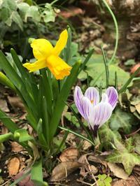 早春のお庭のお花達 - piecing・針仕事と庭仕事の日々