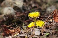 早春の花 - 上州自然散策2