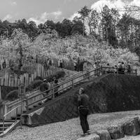 姫神社 - え~えふ写真館