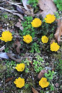 春を告げる - my FHOTO