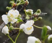 狭庭 - HAIKU/summer PHOTO