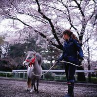 3周遅れのローライ桜 - rambling about...