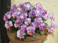 ヌーヴェル・ヴァーグもテレジアンも花盛り - bowerbird garden ~私はニワシドリ~