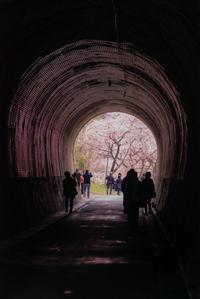 さくら色*tunnel - 気ままにお散歩