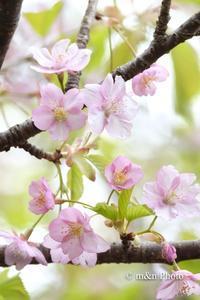 春色の街へ - 季節のおくりもの