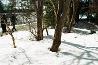 根周り穴のできる三月と3.11 - 照片画廊