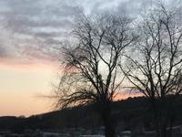 いつもの定点観察「ここチャン散歩も美しい夕焼けも何時も通りです。」編 - ドライフラワーギャラリー⁂ふくことカフェ