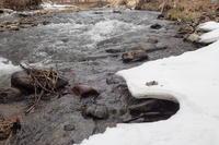 雪融けの川とフキノトウ - オムイと森羅万象