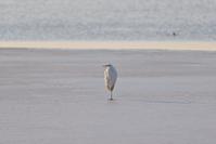 ウトナイ湖の水鳥たち - やぁやぁ。