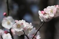 あけぼの山の梅林 - 四季の色 -Colors of the Four Seasons