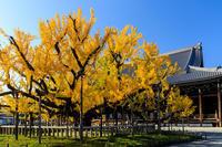 京の紅葉2018逆さ銀杏の勇姿(本願寺) - 花景色-K.W.C. PhotoBlog