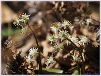 赤塚植物園-2011) - 趣味の写真 ~OLYMPUS E-M1MarkⅡ、PenF~